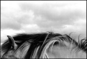 horsescape72.jpg