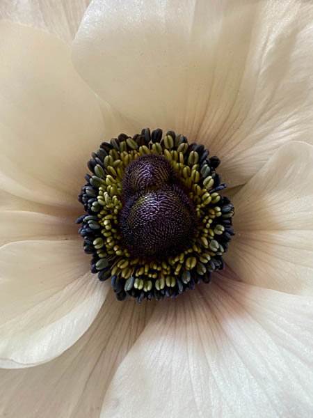 anemone_6985