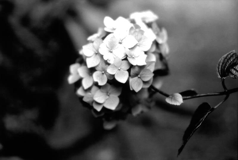 flowersaugust2010-copy